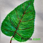 About Plants Leaf