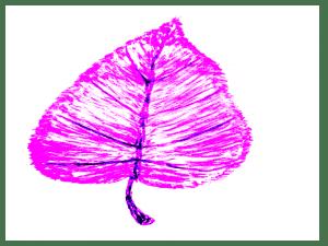 About Plants